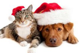 Pampered pets were hit by austerity this Christmas